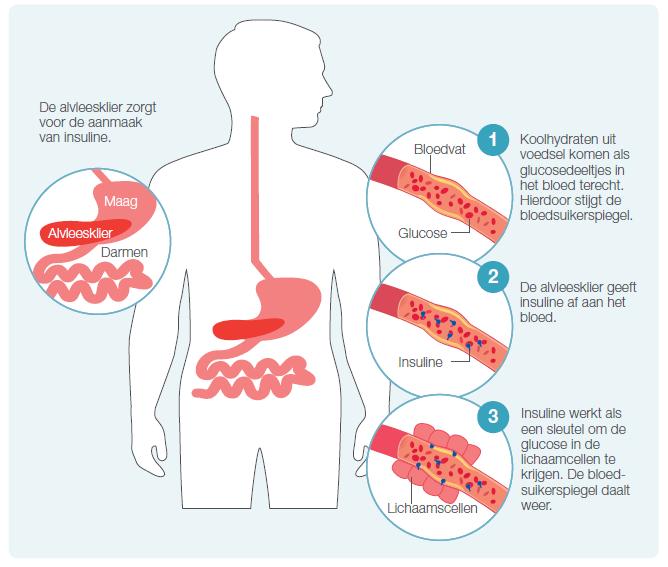 Bloedsuikerspiegel